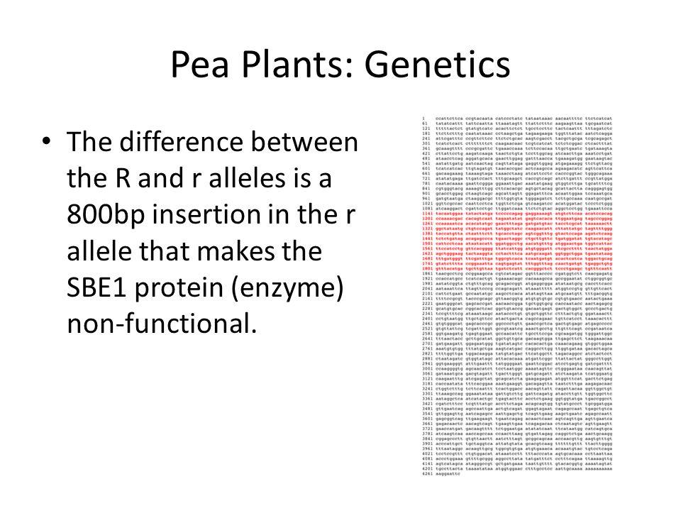 Pea Plants: Genetics