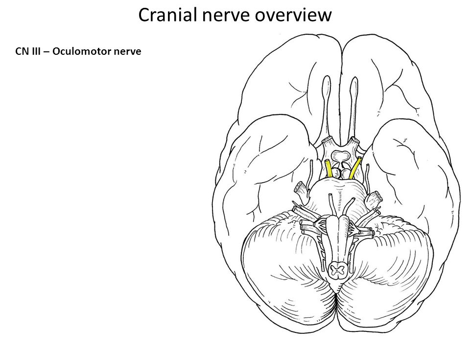 Cranial nerve overview