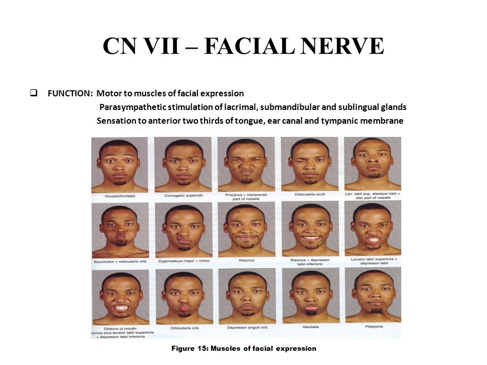 CN VII – FACIAL NERVE FUNCTION: Motor to muscles of facial expression