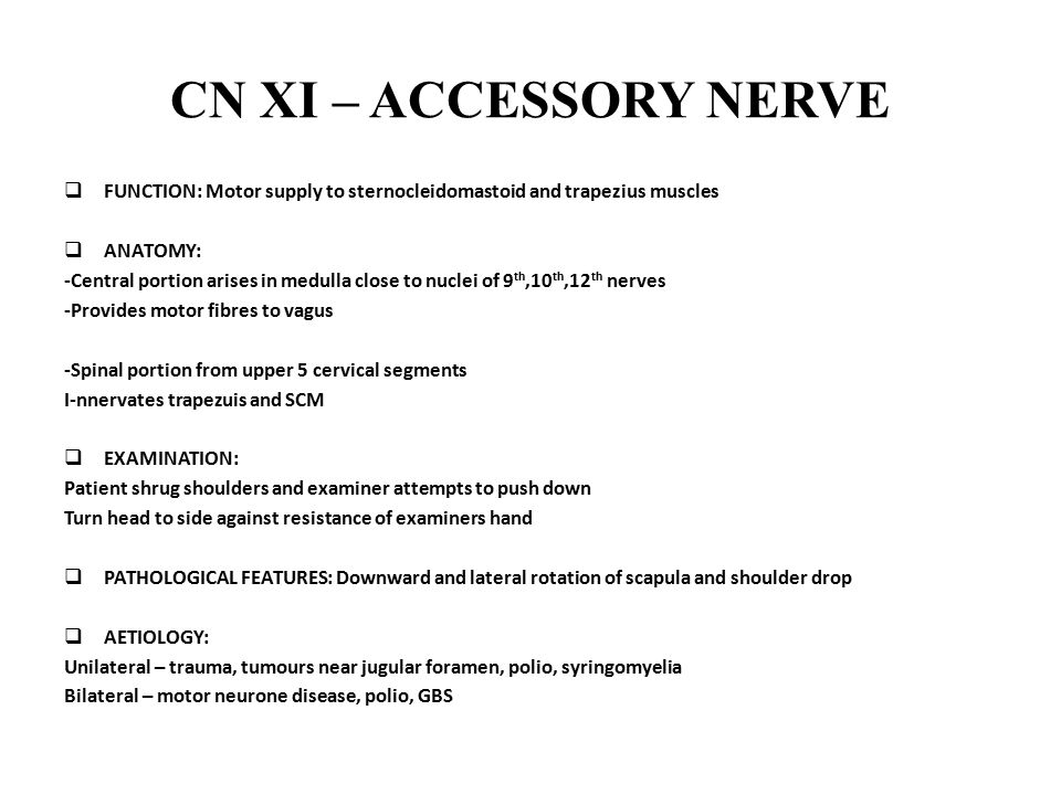 CN XI – ACCESSORY NERVE FUNCTION: Motor supply to sternocleidomastoid and trapezius muscles. ANATOMY: