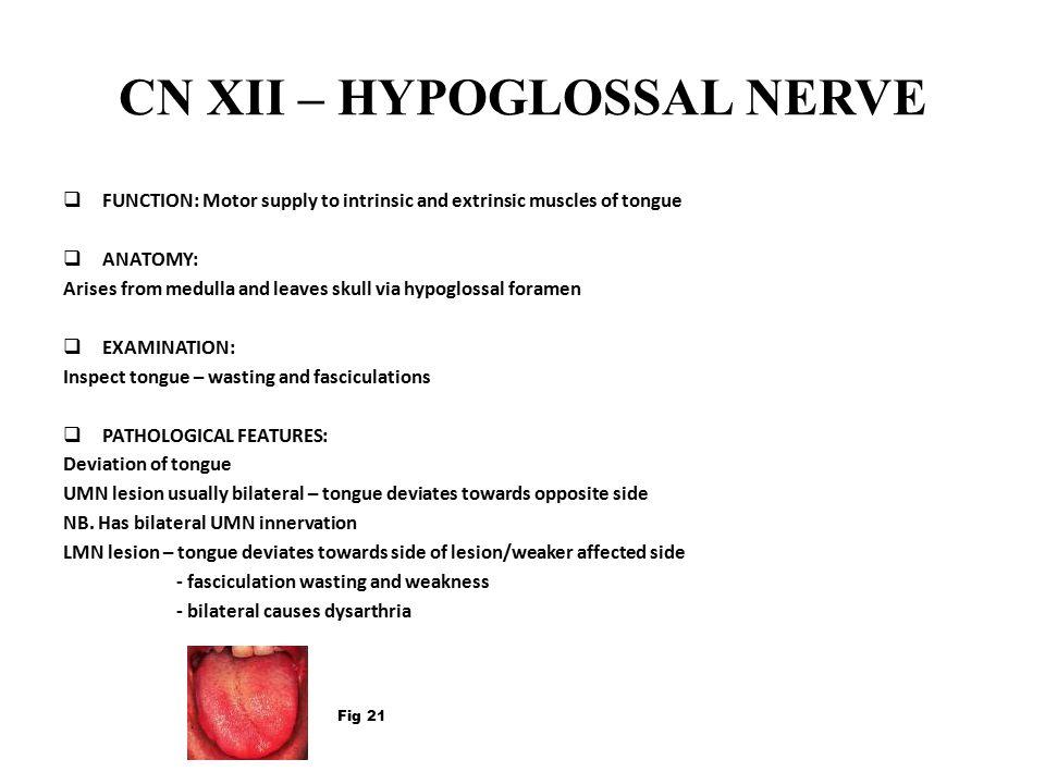 CN XII – HYPOGLOSSAL NERVE