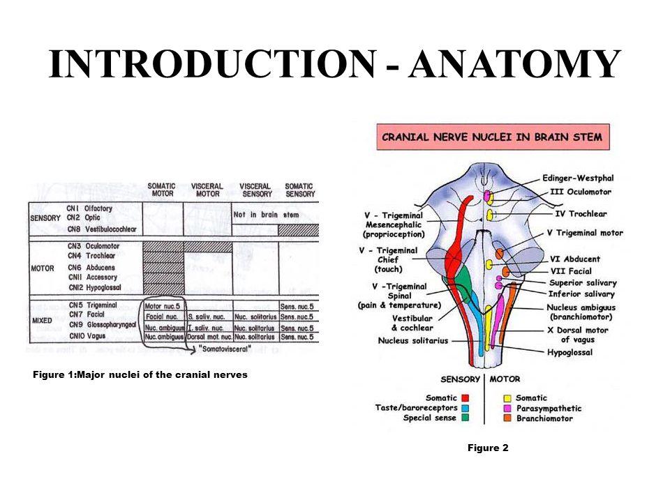 INTRODUCTION - ANATOMY