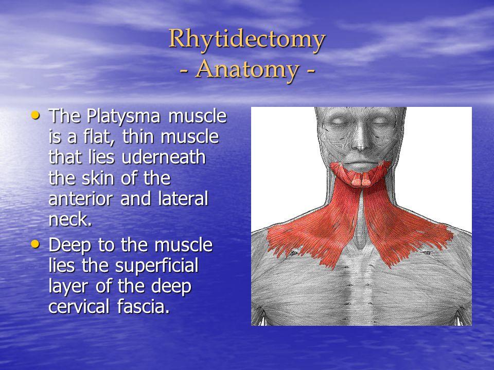 Rhytidectomy - Anatomy -