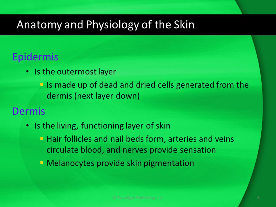 Anatomy and Physiology of the Skin