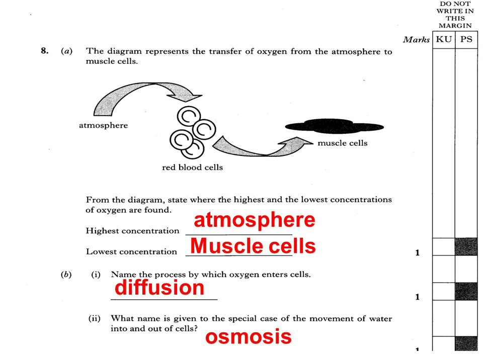 atmosphere Muscle cells diffusion osmosis