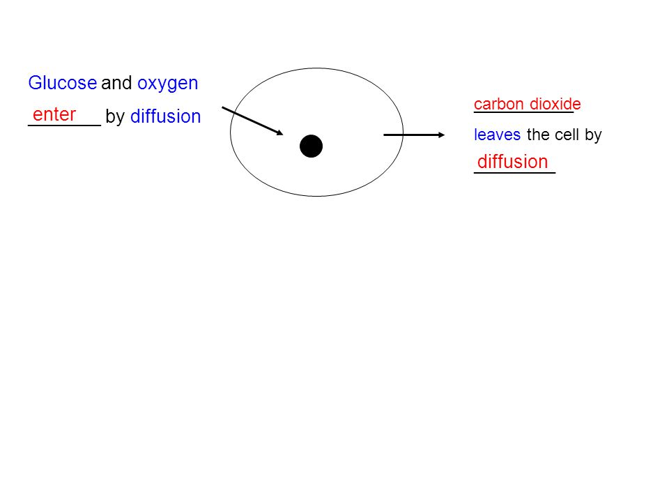 Glucose and oxygen _______ by diffusion enter diffusion ___________