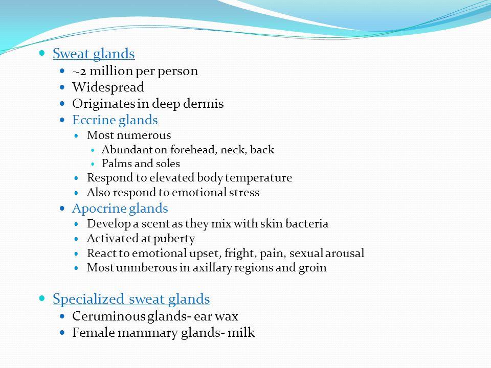 Specialized sweat glands
