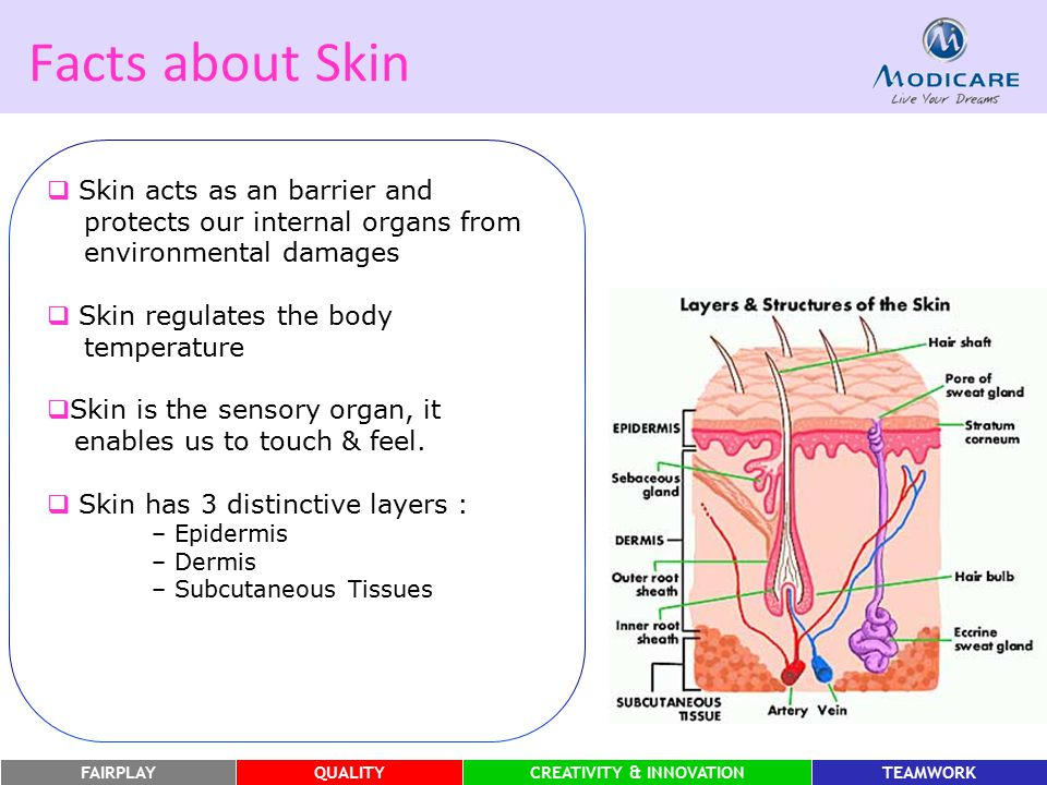 Facts about Skin Skin acts as an barrier and