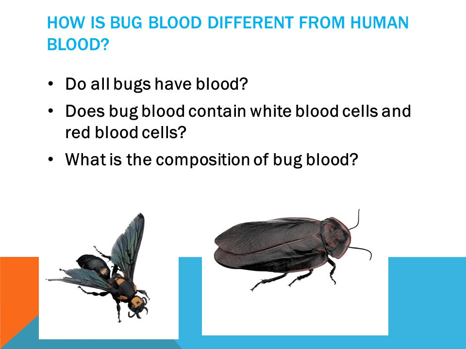 How is bug blood different from human blood