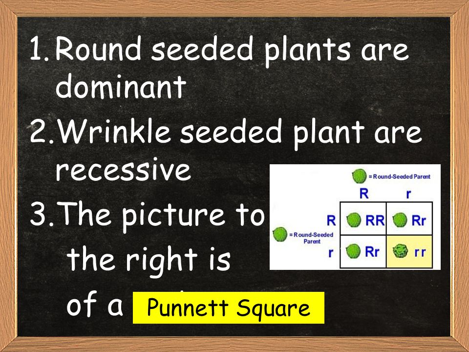 Round seeded plants are dominant Wrinkle seeded plant are recessive