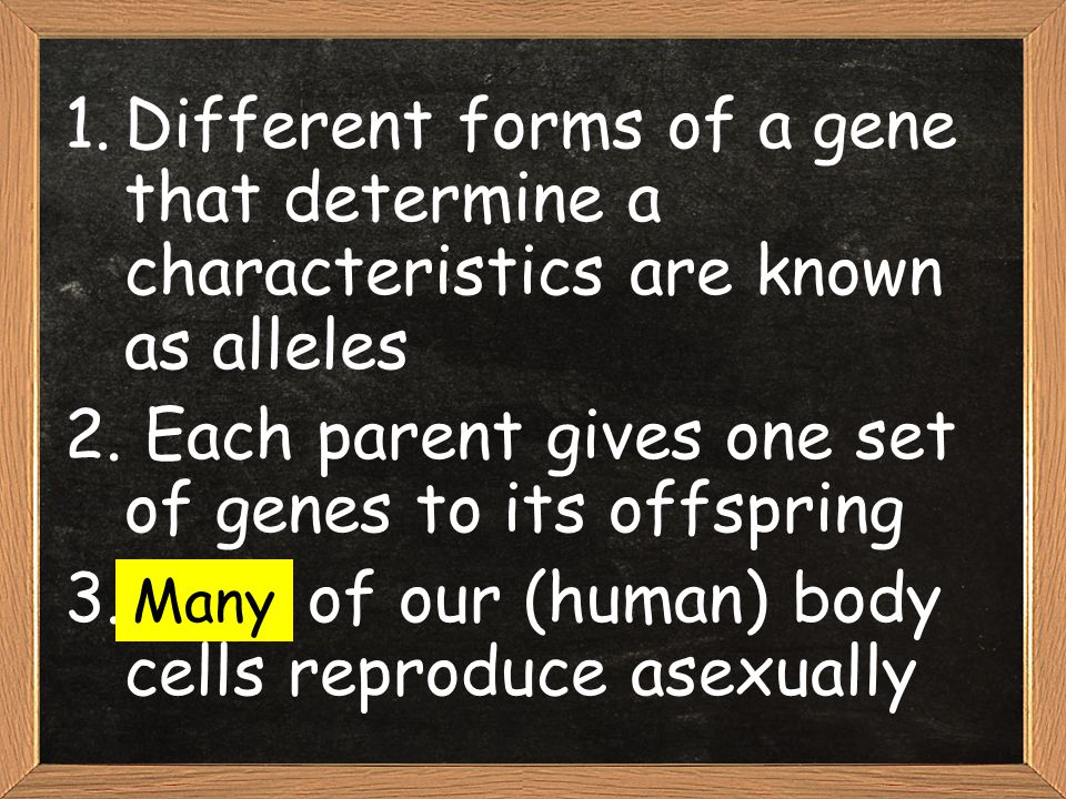 Each parent gives one set of genes to its offspring