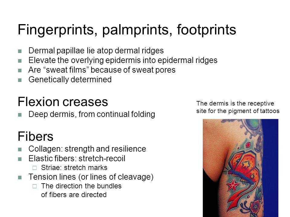 Fingerprints, palmprints, footprints