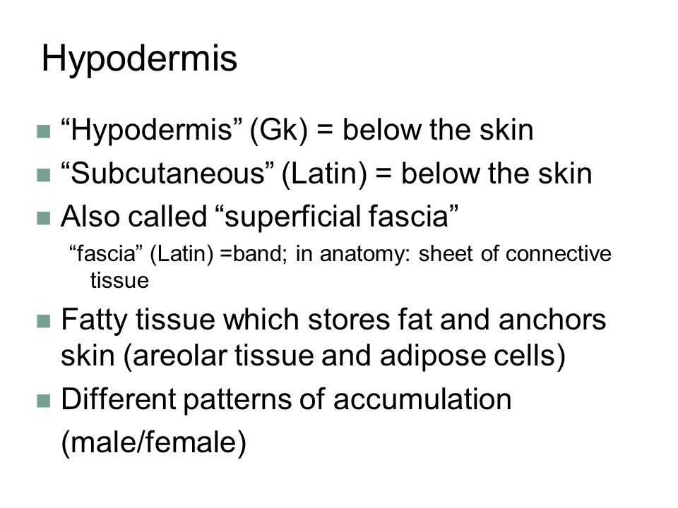 Hypodermis Hypodermis (Gk) = below the skin