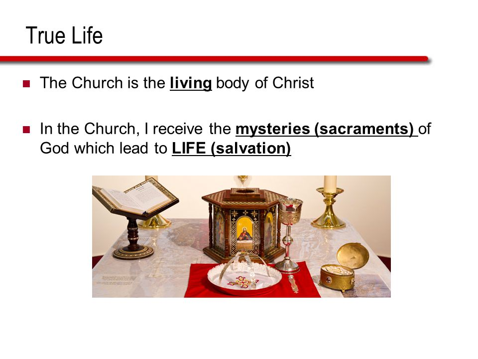 True Life The Church is the living body of Christ