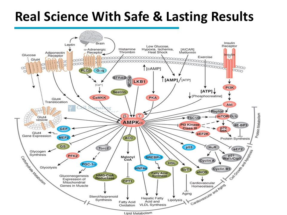 Real Science With Safe & Lasting Results