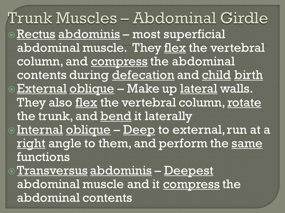 Trunk Muscles – Abdominal Girdle