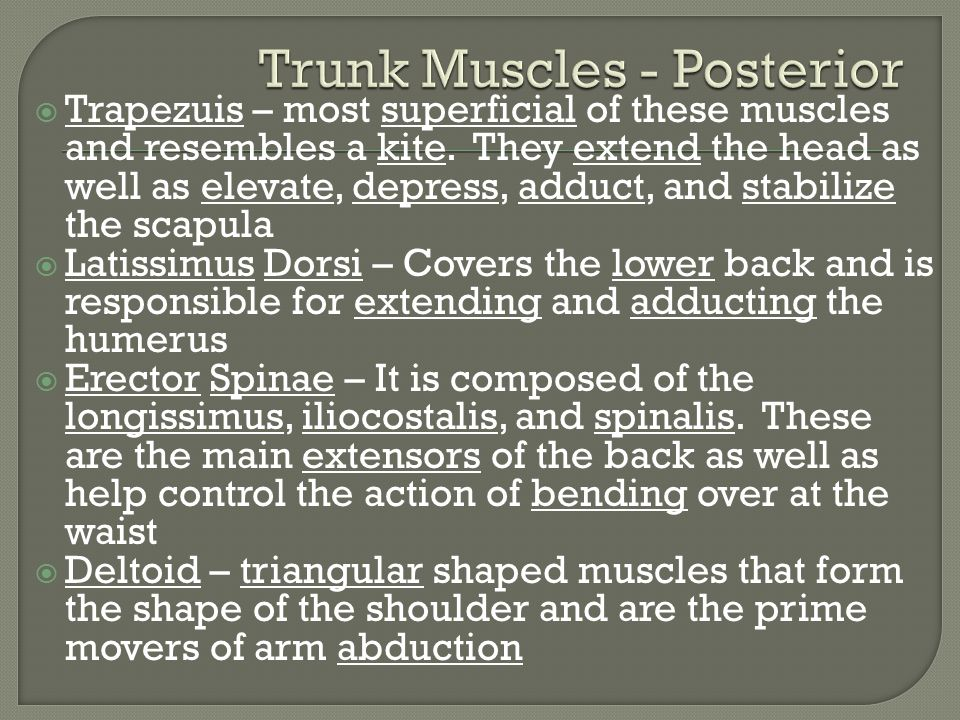 Trunk Muscles - Posterior