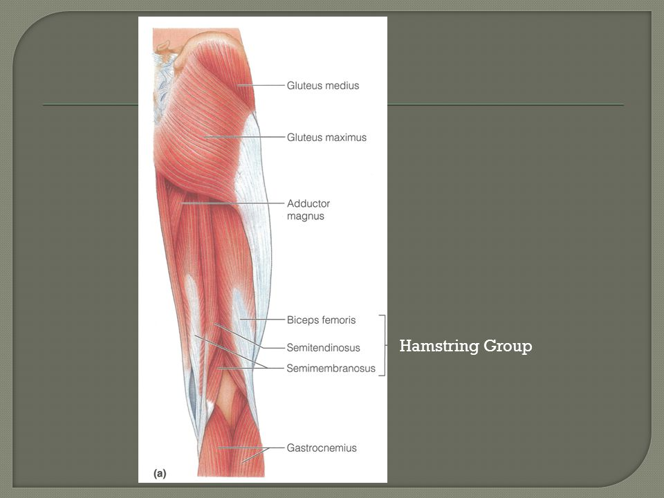 Hamstring Group