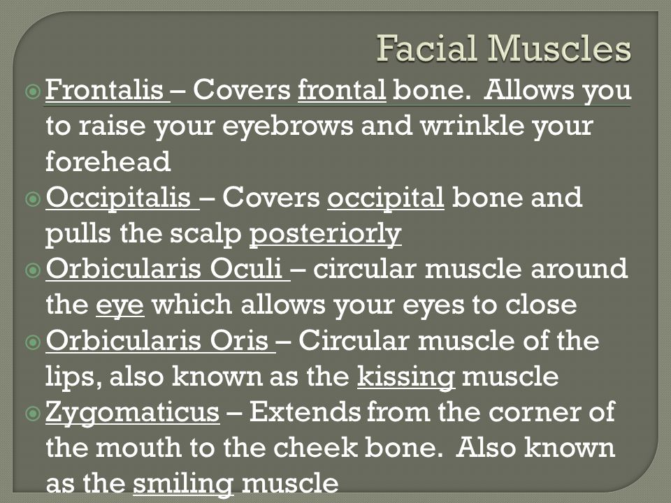 Facial Muscles Frontalis – Covers frontal bone. Allows you to raise your eyebrows and wrinkle your forehead.