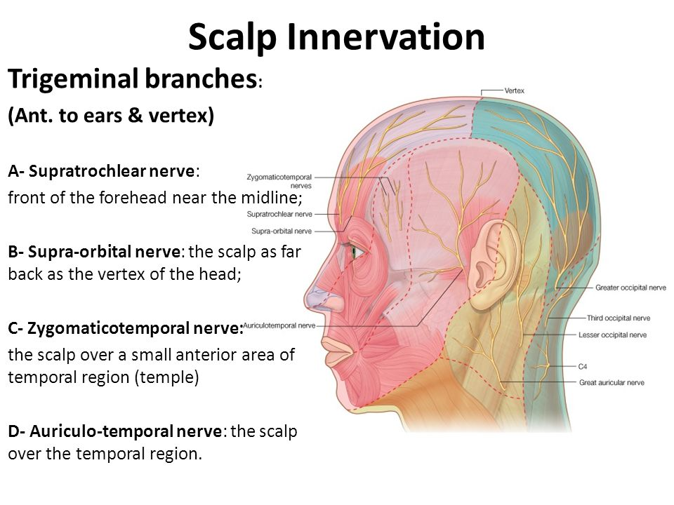 Scalp Innervation Trigeminal branches: (Ant. to ears & vertex)