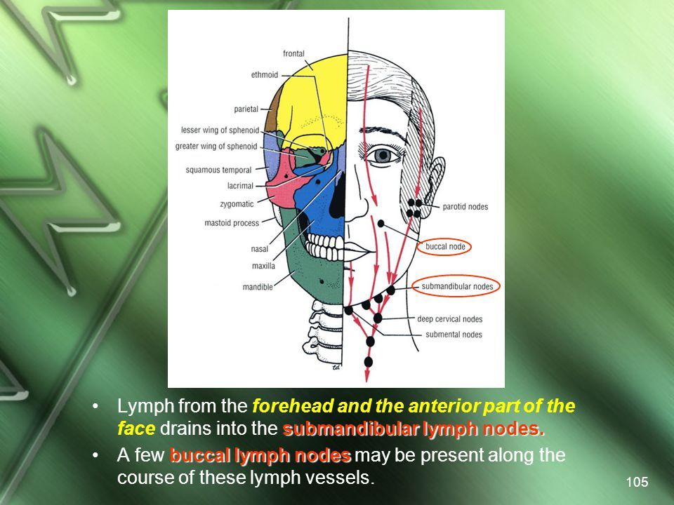 Lymph from the forehead and the anterior part of the face drains into the submandibular lymph nodes.