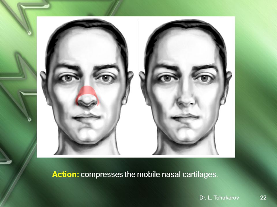 Action: compresses the mobile nasal cartilages.