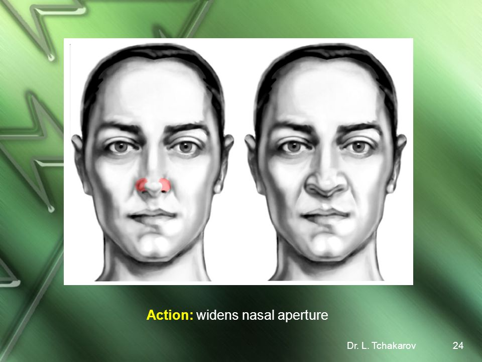 Action: widens nasal aperture