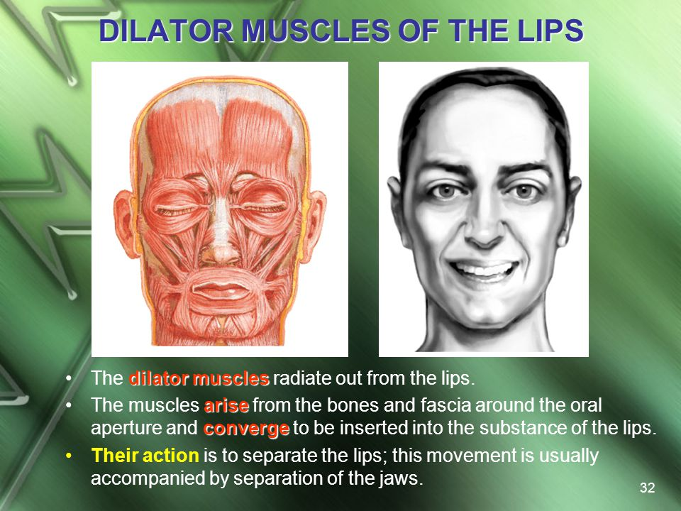 DILATOR MUSCLES OF THE LIPS