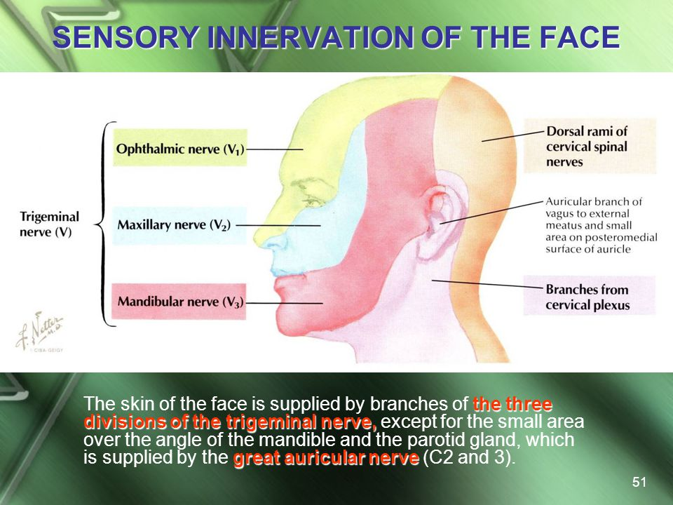 SENSORY INNERVATION OF THE FACE