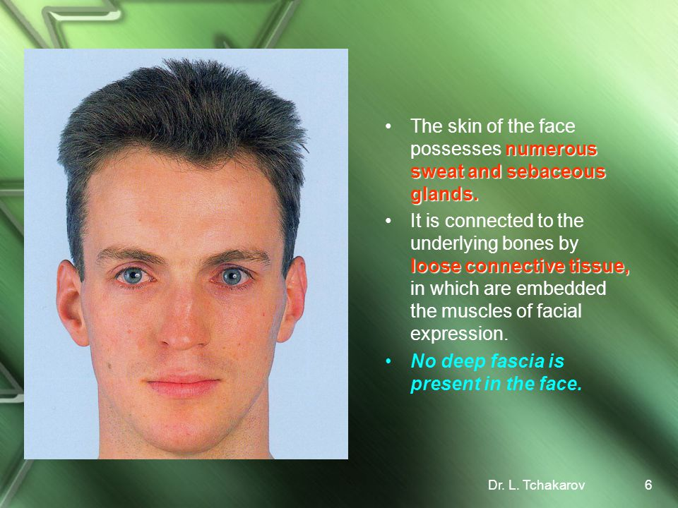 The skin of the face possesses numerous sweat and sebaceous glands.
