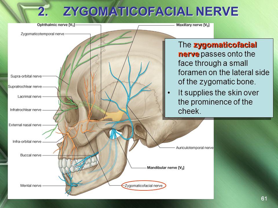 ZYGOMATICOFACIAL NERVE