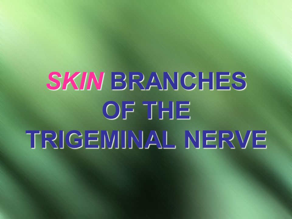 SKIN BRANCHES OF THE TRIGEMINAL NERVE