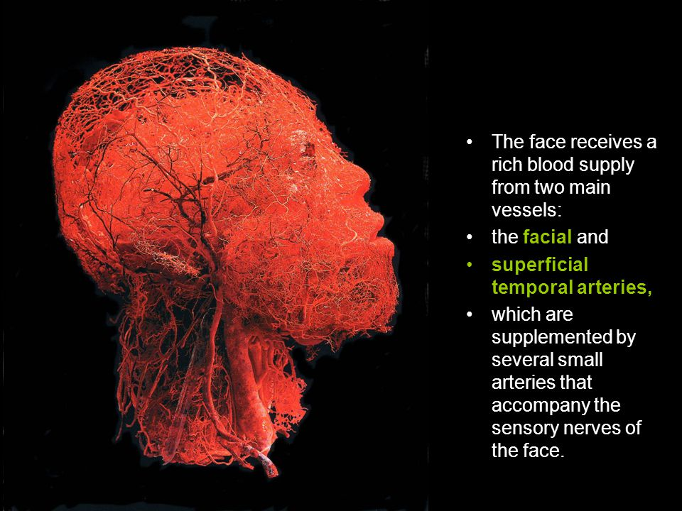 The face receives a rich blood supply from two main vessels: