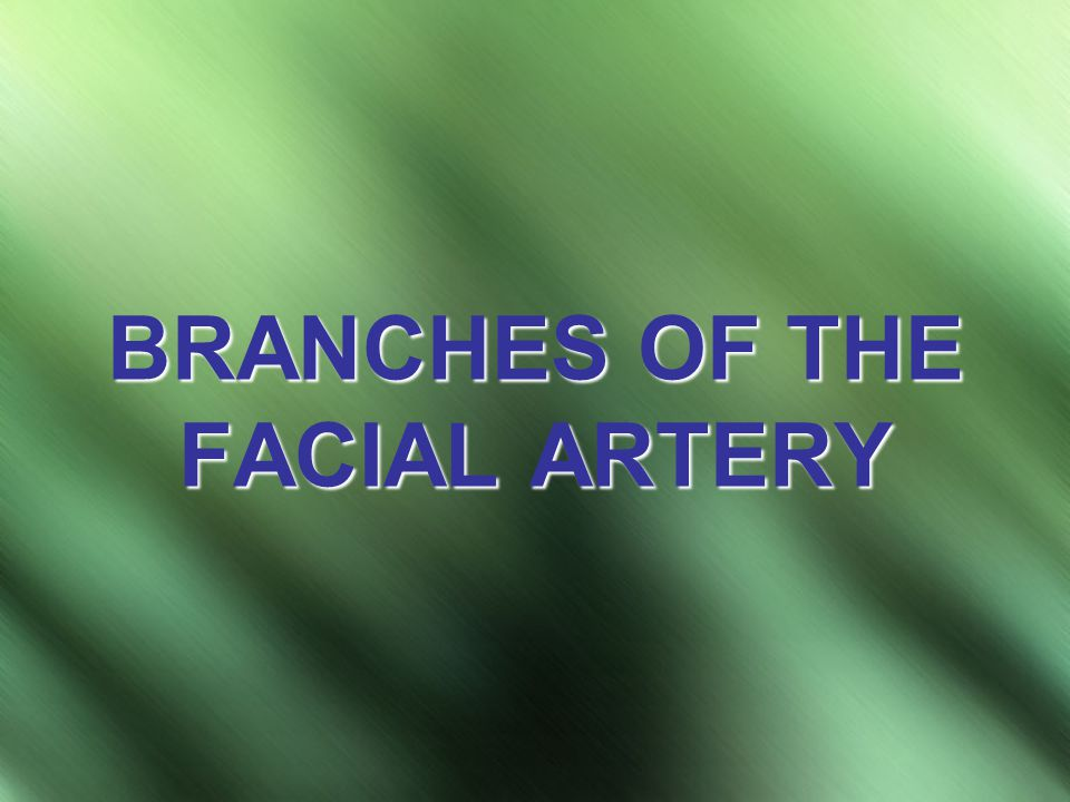BRANCHES OF THE FACIAL ARTERY