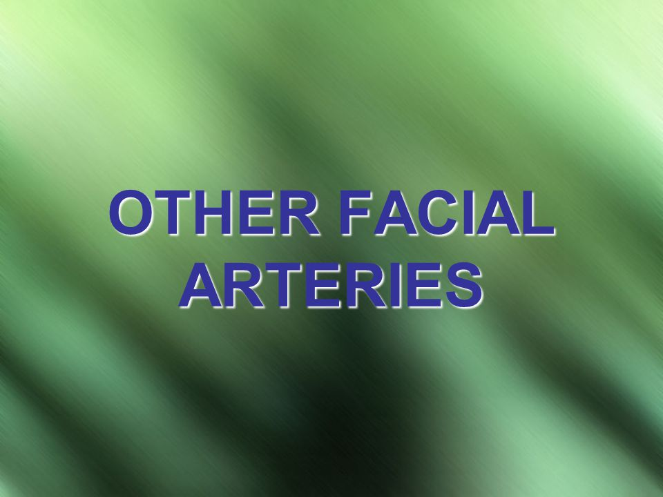 OTHER FACIAL ARTERIES