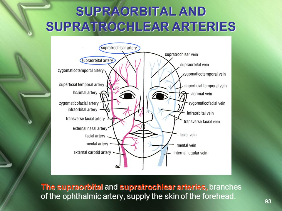SUPRAORBITAL AND SUPRATROCHLEAR ARTERIES
