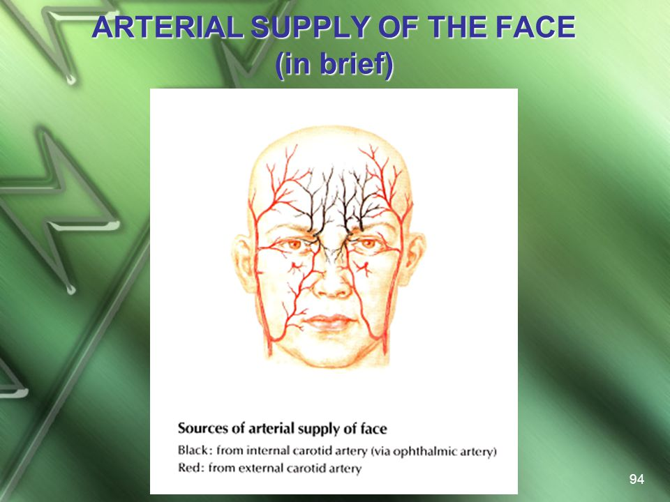ARTERIAL SUPPLY OF THE FACE (in brief)