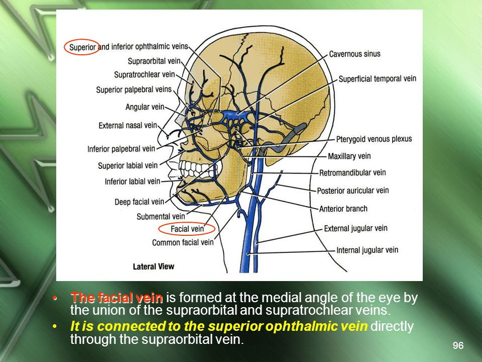 The facial vein is formed at the medial angle of the eye by the union of the supraorbital and supratrochlear veins.