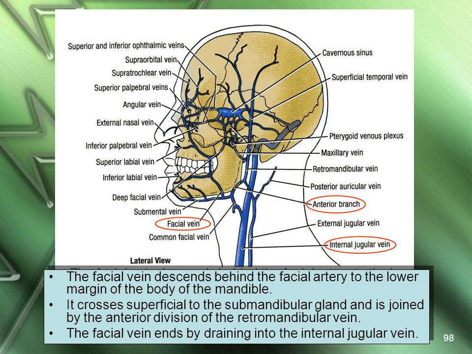 The facial vein descends behind the facial artery to the lower margin of the body of the mandible.