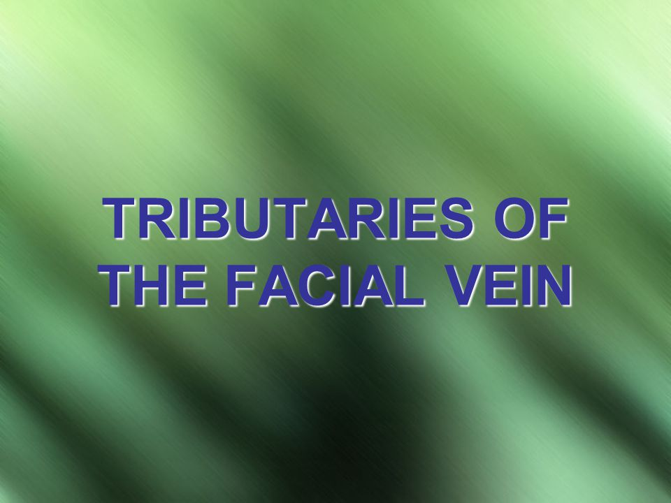TRIBUTARIES OF THE FACIAL VEIN