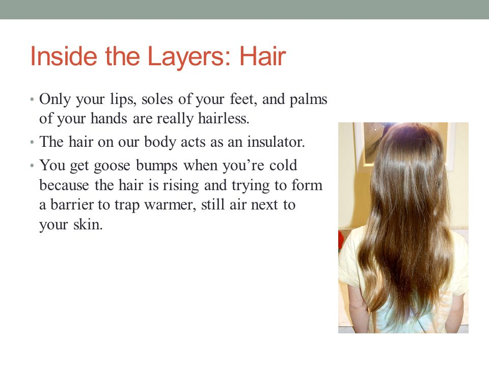 Inside the Layers: Hair