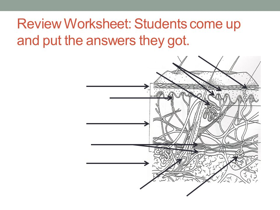 Review Worksheet: Students come up and put the answers they got.