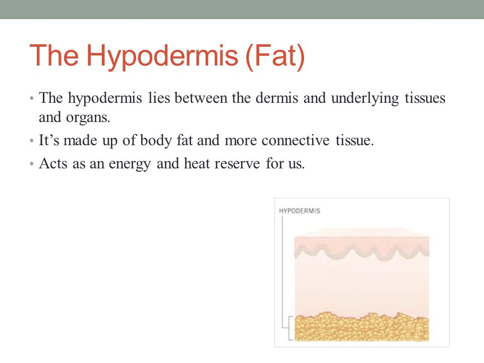 The Hypodermis (Fat) The hypodermis lies between the dermis and underlying tissues and organs. It's made up of body fat and more connective tissue.