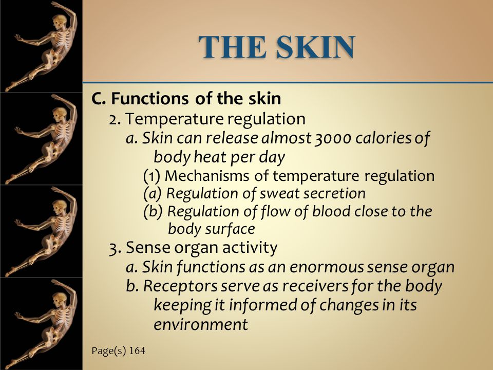 THE SKIN C. Functions of the skin 2. Temperature regulation