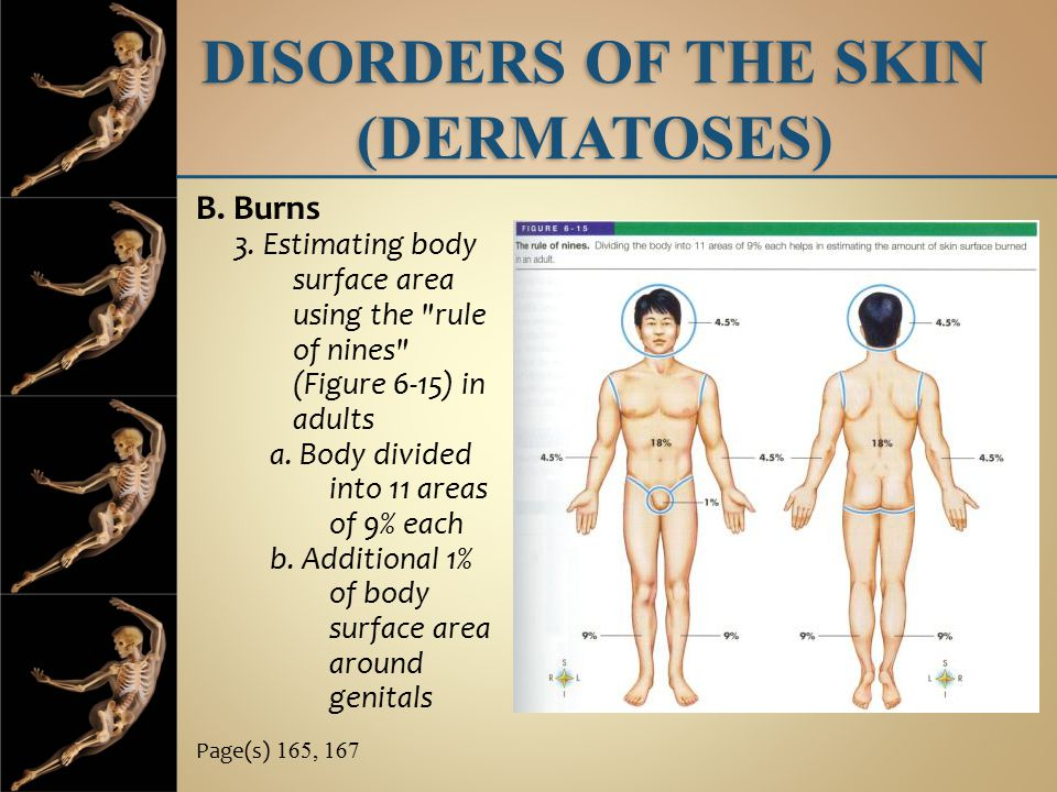 DISORDERS OF THE SKIN (DERMATOSES)