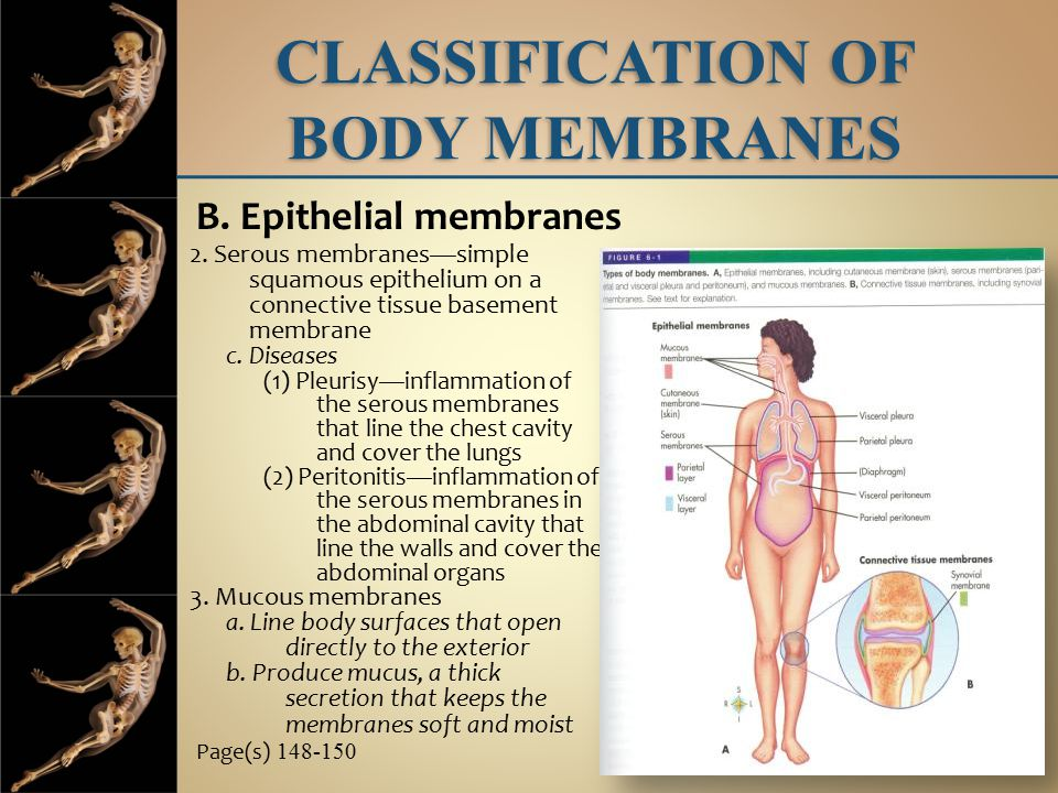 CLASSIFICATION OF BODY MEMBRANES