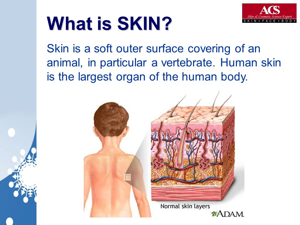 What is SKIN. Skin is a soft outer surface covering of an animal, in particular a vertebrate.