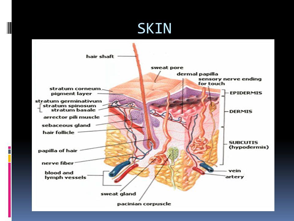 SKIN Origin