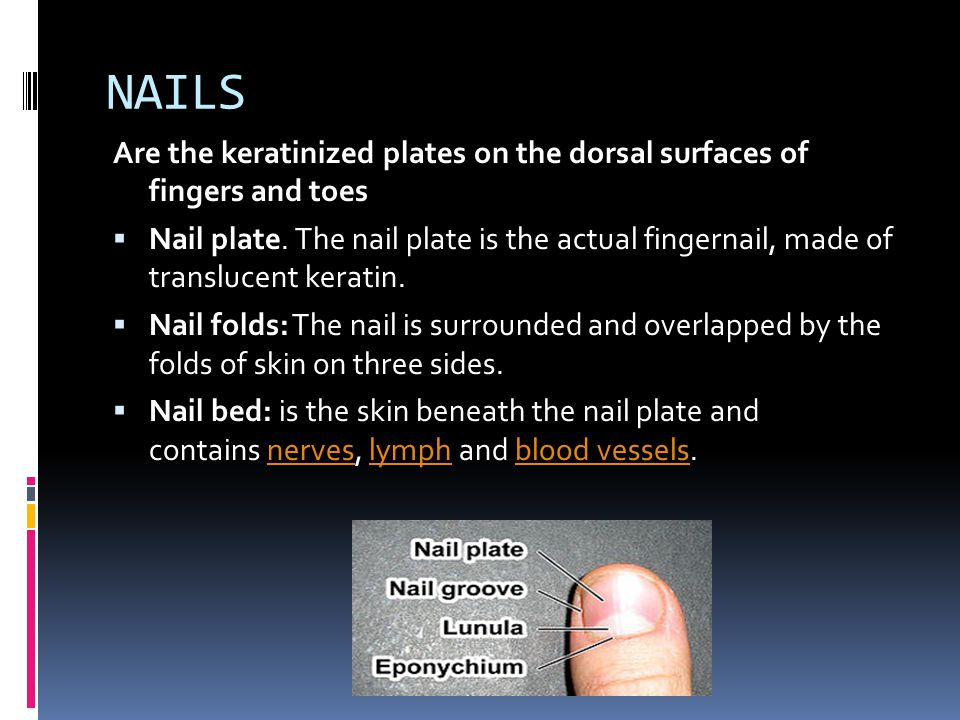 NAILS Are the keratinized plates on the dorsal surfaces of fingers and toes.