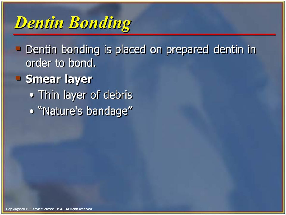 Dentin Bonding Dentin bonding is placed on prepared dentin in order to bond. Smear layer. Thin layer of debris.
